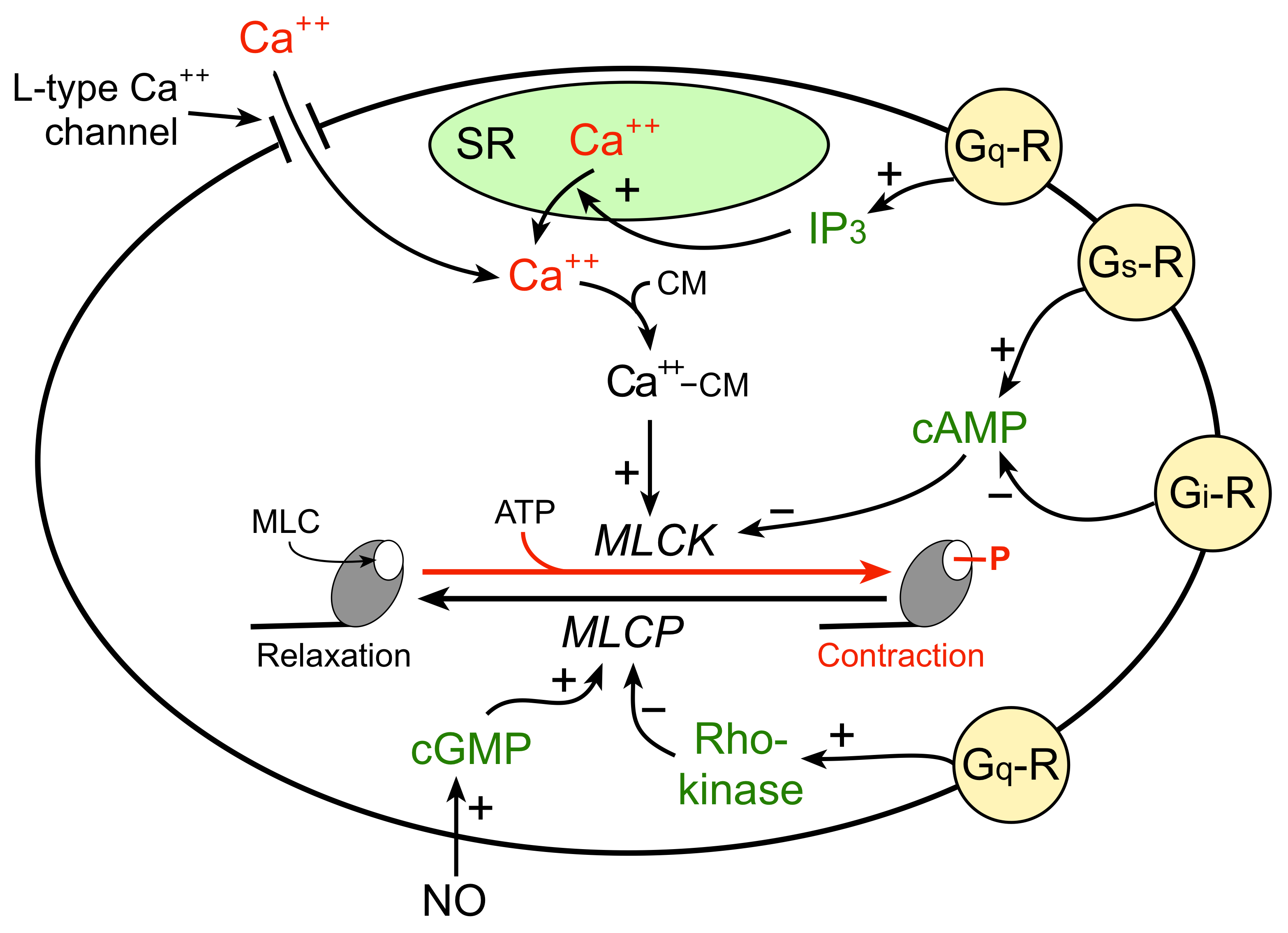 an example of a contraction
